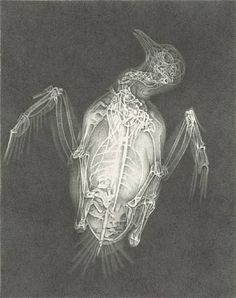 Recollections HALLOWEEN X-RAY Stickers SPOOKY XRAY BUGS SCARY 2 SHEETS