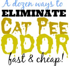 A dozen ways to get rid of cat pee odor (fast and cheap!) – Do It Different