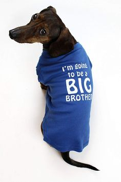 8a77d86df008 Amazon.com : I'm Going to be a Big Brother Dog Shirt by Midlee (Medium) : Pet  Supplies