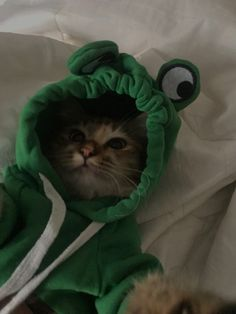 Cute Baby Cats, Cute Little Animals, Cute Funny Animals, Kittens Cutest, Cats And Kittens, Cute Babies, Cat Aesthetic, Pretty Cats, Animals And Pets