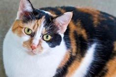 #OptToAdopt Beautiful Mama Kitty Would Love Your Lap – Columbus, NC | Brian's Home