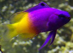 fish - Buscar con Google