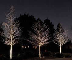 Up light your trees for a cool effect