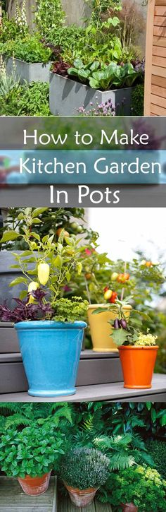 How to make a Kitchen Garden in pots. http://livedan330.com/2015/11/22/make-kitchen-garden-pots/
