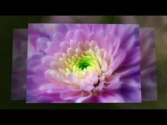 Abraham Hicks ~ Get to the root of your fear ♥♥♥