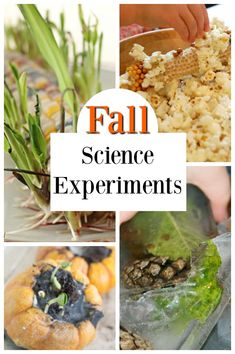STEM and STEAM ideas for the Autumn Awesome fall science experiments for kids! Fabulous STEM and STEAM ideas for the Autumn.Awesome fall science experiments for kids! Fabulous STEM and STEAM ideas for the Autumn. 11 Germ Activities for Kids Kids Learning Activities, Montessori Activities, Autumn Activities, Science Activities, Toddler Activities, Teaching Kids, Learning Skills, Science Ideas, Kindergarten Activities