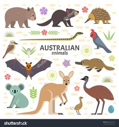 Find Vector Illustration Australian Animals Flying Fox stock images in HD and millions of other royalty-free stock photos, illustrations and vectors in the Shutterstock collection. Kangaroo Illustration, Illustration Kids, Cute Australian Animals, Fox Stock, All Animals Images, Tropical Animals, Les Continents, Poster S, Parenting Hacks