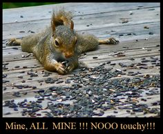 Selfish Squirrel