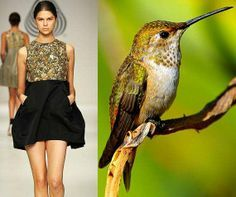 fashion inspired by birds - Google Search