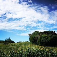 """""""plantações pelo caminho"""" #tracking #natureza #serragrande #caminhandoporserragrande"""