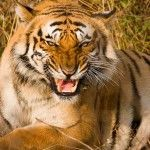 Corbett National Park Blog. Get Latest information, news and informative articles about Corbett National Park and other wildlife of India. Subscribe the blog at http://www.corbett-national-park.com/blog/