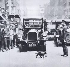 A cat carrying her kitten across the street stopping NYC traffic, July 29, 1925.