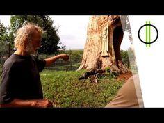330 éves tölgy beton alapokon – Mikes fája és az azt megmentő szerelmes ... Youtube, Plants, Instagram, Flora, Plant, Youtube Movies, Planting
