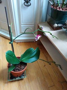 Orkidece : Kurumaya baslayan orkidenize erken teshis