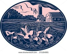 Illustration of a cranberry fruit farm with farmhouse barn and silo in the background done in retro woodcut style.  - stock vector #farmhouse #woodcut #illustration