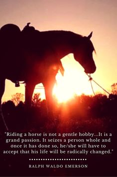 Horse Quotes: Riding a horse is not a gentle hobby… – Art Of Equitation Equine Quotes, Equestrian Quotes, Western Horse Quotes, Equestrian Style, Pretty Horses, Beautiful Horses, Horse Riding Quotes, Riding Horses, Wild Horses Quotes