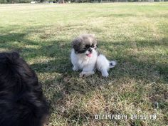 """Chloé my hearts Love & Sky sterk klein sussie ~ 'Ouma se Woef kiners"""" I Movie, Cute Animals, Sky, Puppies, Dogs, Pretty Animals, Heaven, Cutest Animals, Doggies"""