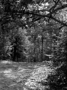 Published! Alone by Shannon L. Buck (Walk in the Woods) http://shannonlbuckauthor.com/published-alone/