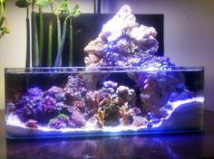 """The Lagoon:An Artistic Impression"" Saltwater Tank Setup, Saltwater Fish Tanks, Saltwater Aquarium, Aquarium Fish Tank, Aquarium Store, Nano Reef Tank, Reef Tanks, Marine Fish Tanks, Marine Tank"