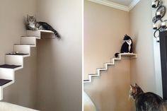 ¡Hazlo tu mismo! Tu gato puede ser más feliz con unos pocos trozos de madera y algo de fieltro ¿Te animas?