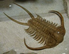 A trilobite that lived about 450 million years ago.