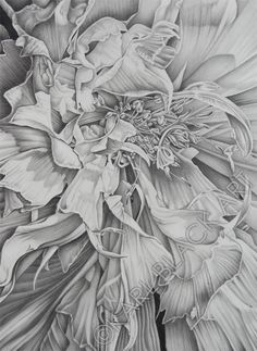 black and white floral art with graphite pencil