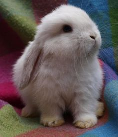 a house bunny is what I'd like