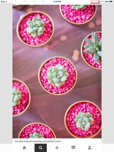Pink in Pink Succulents