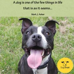 Image result for trust+animals