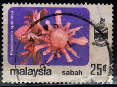 Malaysia, Sabah.  FLOWER TYPE OF JOHORE, 1979, PHAEOMERIA SPECIOSA.  Scott 38  A16 issued in 1979 Apr 30 with Wmk. 378, Perf. 15 x 14 1/2, Lithogravure. 15c.