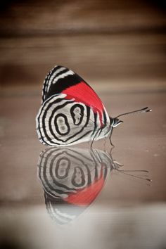 ~mariposa ~ butterfly reflection by Mostly Tim~
