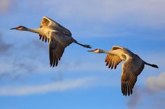 This image is a great example of movement because the birds draw your eye to the direction they are going.