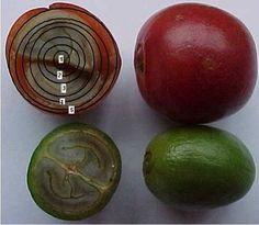 Importância da intermitência no processo de secagem de café - Radares Técnicos - Pós-Colheita - CaféPoint