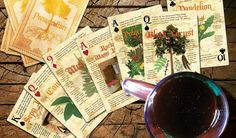 Permaculture Playing Cards