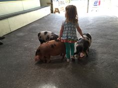 Trotter time with the piglets at Farmer Palmer's Farm Park | Poole | Dorset UK. Children's farm days out.