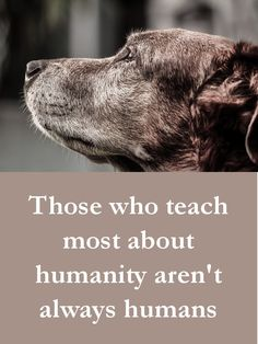 Dog Quotes - Those who teach most about humanity aren't always humans