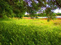 Simplesmente Natural | Fotografia de Luigi Pinto Leite | Olhares.com