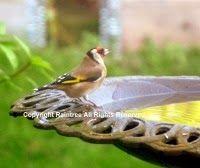 Diary Of A Wild Country Garden http://diaryofwildgarden.blogspot.co.uk/