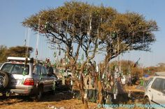 Beer Tree at Oppikoppi Sweet Thing 2012 Bullet For My Valentine, Live Love, Festivals, South Africa, All Things, Beer, African, Memories, Album