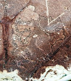 Leaf-mining insects destroyed with the dinosaurs, others quickly appeared - http://scienceblog.com/73562/leaf-mining-insects-destroyed-dinosaurs-others-quickly-appeared/