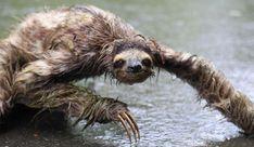 Bildergebnis für cute animals