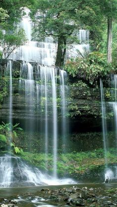 Russell Falls, Mount Field, National Park, Tasmania, Australia Have seen these falls - beautiful area. Waterfall Scenery, Forest Waterfall, Waterfall Photo, Rainbow Waterfall, Mountain Waterfall, Forest Mountain, Waterfall Wallpaper, Scenery Wallpaper, Nature Wallpaper