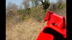 Elephant Safaris -- To The Edge