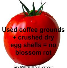 Just mix coffee grounds and eggshells into the soil to prevent blossom rot in your garden.