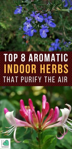 As nature followers, we don't require electronic air purification systems– we want to use the power of nature to detoxify the air and so we're mosting likely to utilize natural herbs in order to do that. The follow natural herbs could draw nearly 90% of VOCs out of your area and leave you with pure, filtered air.
