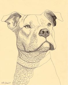 Dogs Drawings Pitbull - Pets For U                                                                                                                                                                                 More