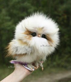 16 Adorable and Ultra Fluffy Animals Will Melt Your Heart - I Can Has Cheezburger? and pets 16 Adorable and Ultra Fluffy Animals Will Melt Your Heart Funny Owls, Cute Funny Animals, Cute Dogs, Funny Birds, Adorable Baby Animals, Silly Dogs, Baby Animals Pictures, Cute Animal Pictures, Funny Owl Pictures