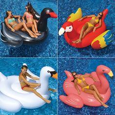 Swimline Giant White Swan, Giant Flamingo, Giant Black Swan and Giant Parrot…