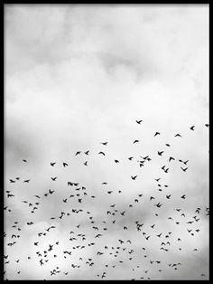 Bird sky, plakat i gruppen Plakater og posters hos Desenio AB (8257)