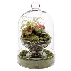 Under The Table and Dreaming: Terrarium Ideas and Inspiration {Easy DIY Ideas for Indoor Gardens}
